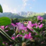 [:it]Vista della Presolana dalle camere[:en]Presolana montain view from the room Hotel des Alpes [:]